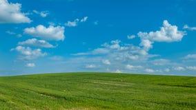 Landbouw landschap het mooie groene gebied onder de blauwe bewolkte hemel spruiten van korrelgewassen Royalty-vrije Stock Afbeeldingen