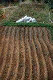 Landbouw in Libanon Royalty-vrije Stock Afbeelding