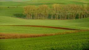 Landbouw op de rollende heuvels van Moravië met tarwe filds en tractor Royalty-vrije Stock Afbeeldingen