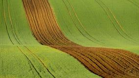 Landbouw op de rollende heuvels van Moravië met tarwe filds en tractor Royalty-vrije Stock Foto