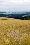 Landbouw op heuvels in de zomer Royalty-vrije Stock Afbeelding