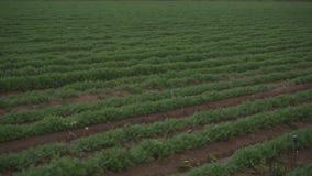 Landbouw, pan van voren gecultiveerd gebied stock footage
