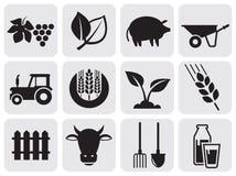 Landbouw pictogrammen. Royalty-vrije Stock Foto's