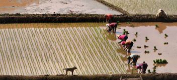 Landbouw productie Stock Fotografie