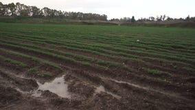 Landbouw, regenschade gecultiveerd gebied stock video