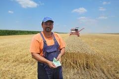 Landbouw, tarweoogst royalty-vrije stock afbeelding