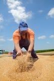 Landbouw, tarweoogst stock afbeelding