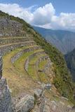 Landbouw terras bij de oude ruïnes Inca van Royalty-vrije Stock Foto