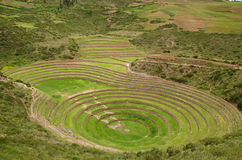 Landbouw Terrassen Inca in Moray, Peru stock foto