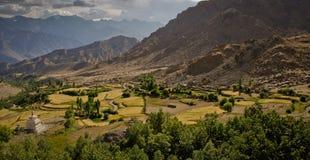 Landbouw in vallei met gele de landbouwpercelen Stock Foto