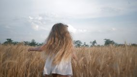 Landbouw, weinig kindmeisje die over korrelgebied lopen die haar handen over gele aartjes in oogstseizoen glijden stock videobeelden