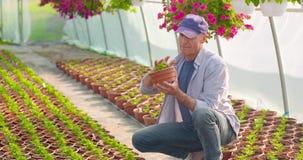 Landbouw zekere mannelijke tuinman die ingemaakte bloeminstallatie onderzoeken stock videobeelden