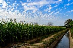 Landbouwbedrijf 2 van het graan royalty-vrije stock afbeeldingen