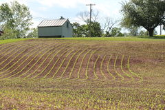 Landbouwbedrijf 1 Stock Foto