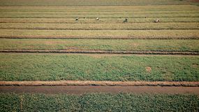 Landbouwbedrijf Royalty-vrije Stock Foto's