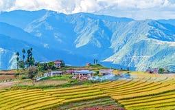 Landbouwbedrijf in Bhutan oostelijke bergen stock afbeelding