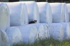 Landbouwbedrijf Cat Resting royalty-vrije stock foto's
