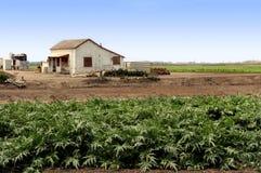 Landbouwbedrijf dat uitbouwt stock fotografie