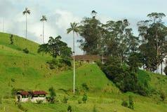 Landbouwbedrijf in de Vallei Cocora (Colombia) Stock Fotografie