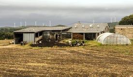 Landbouwbedrijf in de weiden stock foto