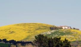Landbouwbedrijf en gele bloemen Royalty-vrije Stock Afbeelding