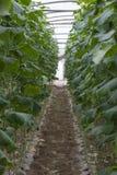 Landbouwbedrijf en moestuinen en serres dichtbij het dode overzees Stock Afbeeldingen