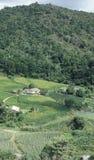 Landbouwbedrijf en ontbossing in zuidelijk Brazilië Royalty-vrije Stock Foto