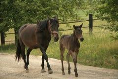 Landbouwbedrijf en paard Royalty-vrije Stock Afbeelding
