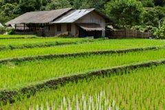 Landbouwbedrijf en terraspadieveld Stock Afbeelding