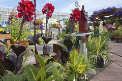 Landbouwbedrijf en tuinkinderdagverblijf in Canby Oregon Royalty-vrije Stock Foto's