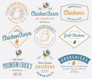 Landbouwbedrijf gekweekt gekleurd kippenvlees Stock Afbeelding