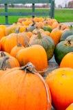 Landbouwbedrijf gekweekte pompoenen voor verkoop stock foto's