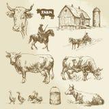 Landbouwbedrijf, koe, landbouw Royalty-vrije Stock Foto