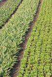 Landbouwbedrijf in Lange Vallei Royalty-vrije Stock Afbeeldingen