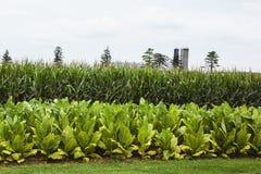 Landbouwbedrijf met plantaardige gewassen royalty-vrije stock afbeeldingen