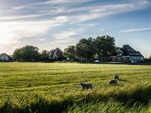 Landbouwbedrijf met schapen Stock Foto