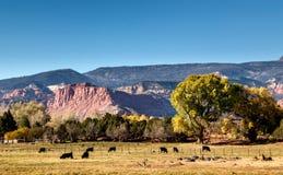 Landbouwbedrijf met vee in Torrey, Utah stock fotografie