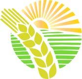 Landbouwbedrijf met zonneschijn royalty-vrije illustratie