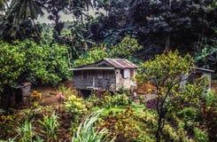 Landbouwbedrijf op Dominica stock afbeeldingen