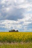 Landbouwbedrijf op een gebied Stock Afbeeldingen