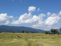 Landbouwbedrijf op WaingKean Royalty-vrije Stock Afbeelding