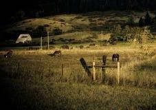 Landbouwbedrijf in platteland Stock Afbeelding