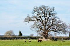 Landbouwbedrijf in Suffolk Stock Foto