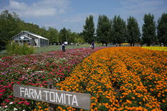 Landbouwbedrijf Tomita Royalty-vrije Stock Afbeelding