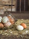 Landbouwbedrijf verse eieren Stock Afbeelding