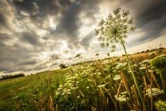 Landbouwbedrijf Wildflowers Royalty-vrije Stock Fotografie