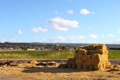 Landbouwbedrijf in Zuid-Afrika Royalty-vrije Stock Foto's