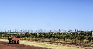 Landbouwbedrijfaanhangwagen naast een aanplanting royalty-vrije stock afbeelding