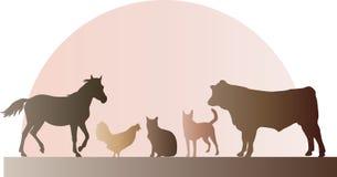 Landbouwbedrijfdieren Stock Foto