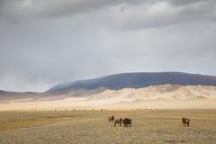 Landbouwbedrijfdieren in Mongools landschap Stock Fotografie